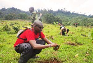 Aberdares-Team planting trees