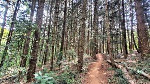 Karura Forest - Enviro Wild