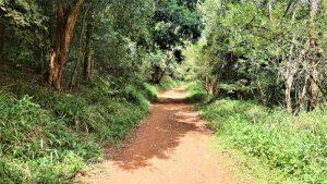 Karura Forest- Enviro Wild